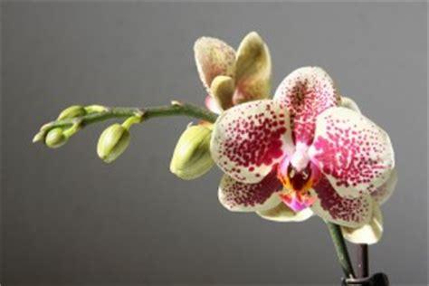 Comment Entretenir Une Fougère by Comment Faire Refleurir Une Orchid 233 E Toutes Les Astuces