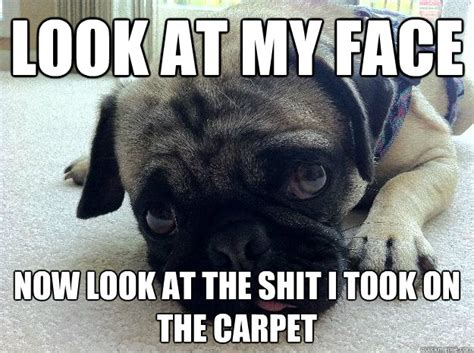 pug puns pug jokes i just like pug jokes and pug meme