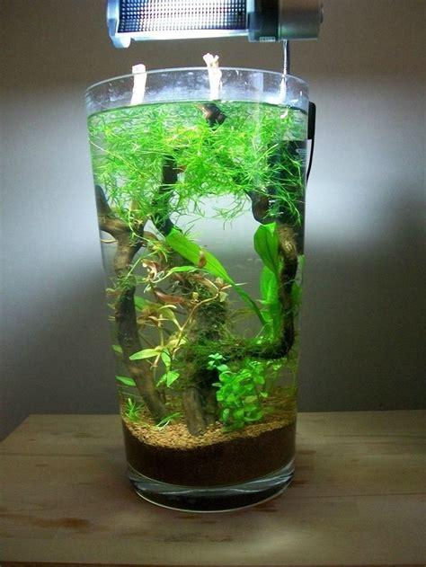 aquascape mini ikan cupang    membuatnya