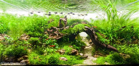 Aquascape Driftwood by 2012 Aga Aquascaping Contest 390