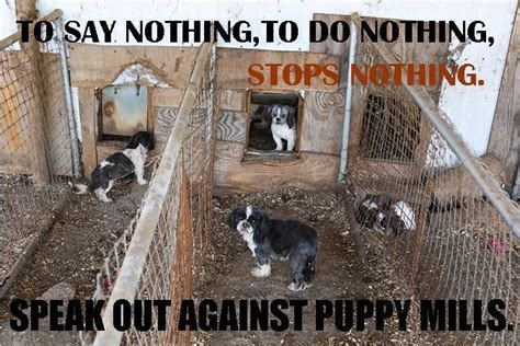buying a puppy from a pet store a horror show pet stores and puppy mills respectyourdog