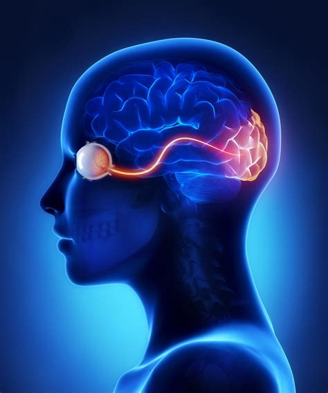 Optics And Vision by The Optic Nerve And Its Visual Link To The Brain