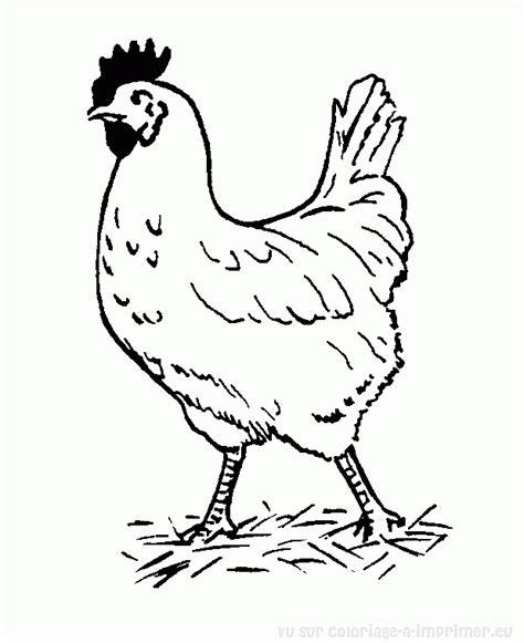 chicken sandwich coloring page buzz coloring 121 dessins de coloriage poule 224 imprimer