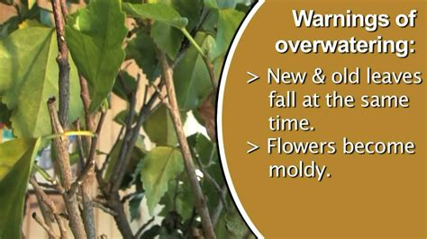 signs   watering plants youtube