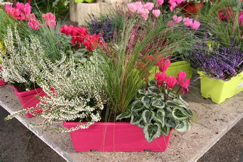 Planter Des Pensées En Jardiniere by Plante Pour Jardiniere