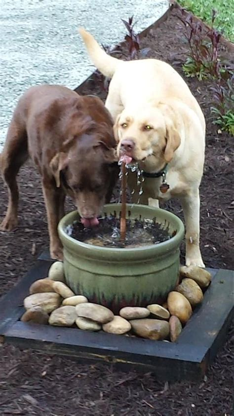 Garden Dogs 845 Best Images About Diy Projects On