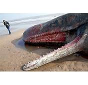 Accidental Death Experts Believe The Whale Collided With A Boat And