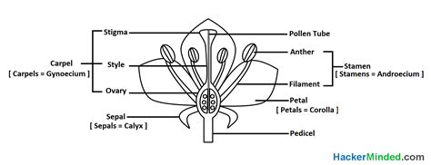 flower diagram label flower parts flowers ideas for review