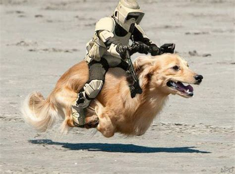 wars puppy dogs celebrate wars day the results are hilarious barkpost
