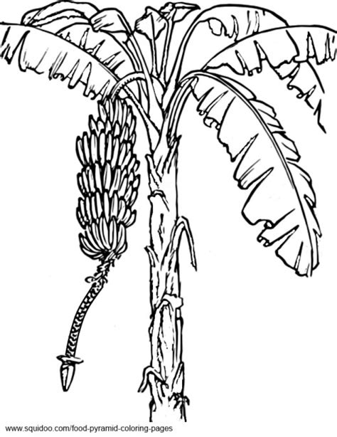 8 Images Of Fruit Tree Coloring Pages Apple Tree Banana Tree Coloring Page