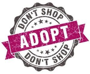 adopt a albuquerque adopt a pet 187 albuquerque vetco