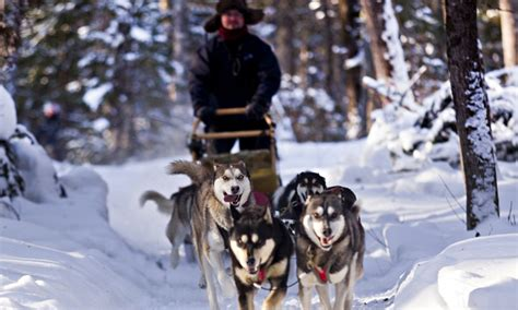 sledding canada husky sledding in canada one and his dogs travel the guardian