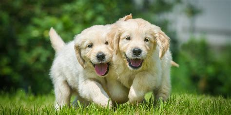 happiest animals  earth  huffpost