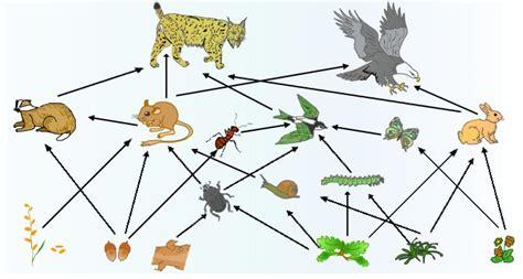 informacion sobre las cadenas y redes alimentarias biolog 237 a ambiente y sociedad cadenas y redes alimenticias