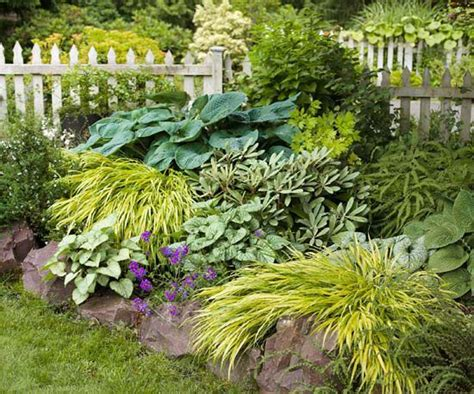 best plants for curb appeal shade plants gardens beds add curb front yard shades