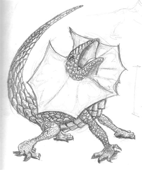 frilled lizard coloring pages drawings of lizard clipart best