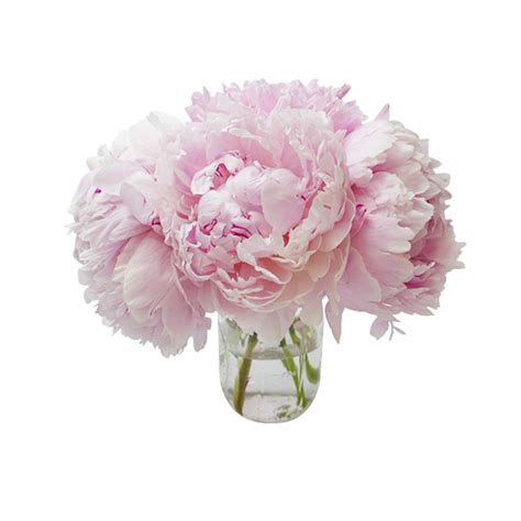 Send Bouquet by Peony Delivery Send A Bouquet Of Peonies Ode 224 La 174