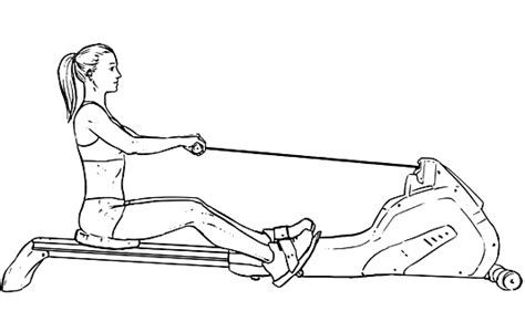 rowing machine diagram 11 cardio exercises the muscles they work