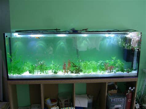 beleuchtung aquarium led beleuchtung aquarium hausumbau planen