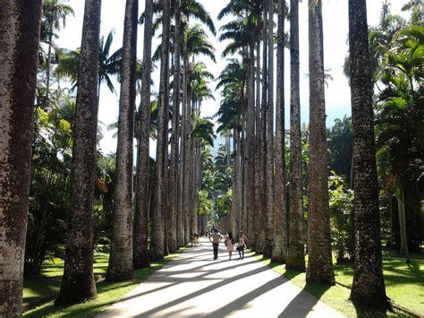 royal botanical garden rio de janeiro   brazil