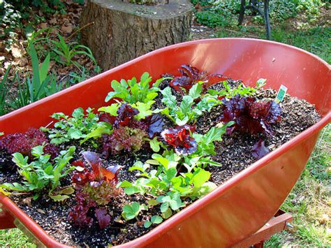 cool small palnts to grow harvesting vegetables herbs the micro gardener