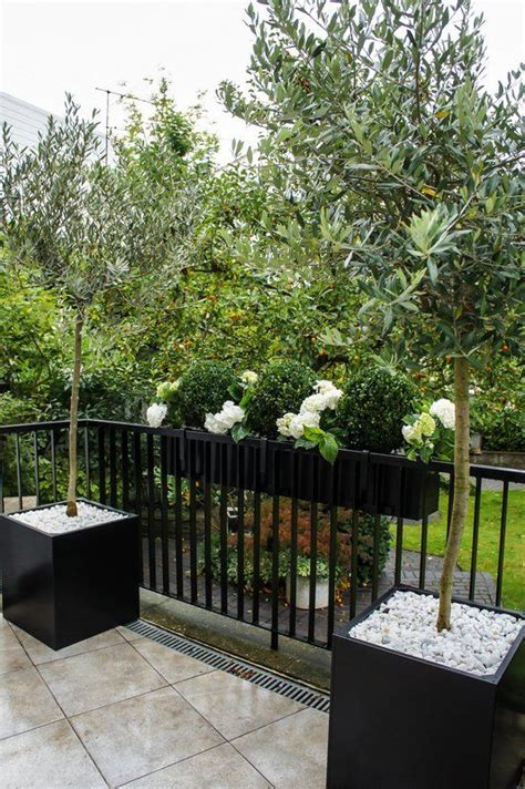 Planter Trees by Best 25 Fence Planters Ideas On Happy Day