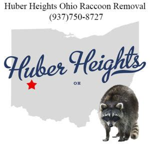 how to get rid of a raccoon in your backyard huber heights get rid of raccoon in attic wildlife