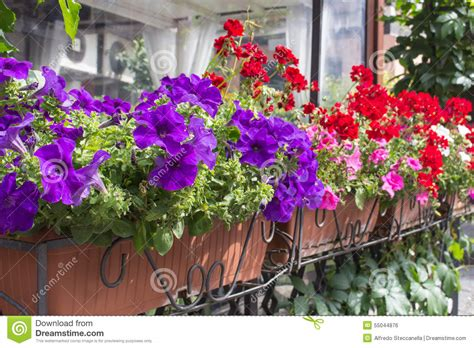 balcony flowers balcony flower boxes filled with flowers stock photo
