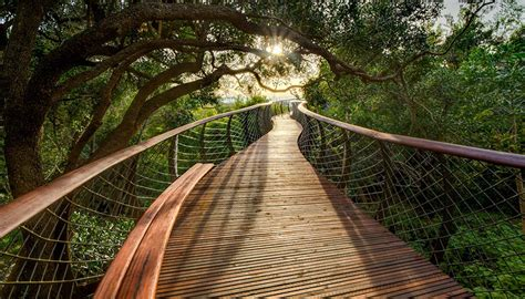 this canopy walkway lets you walk above the trees in cape