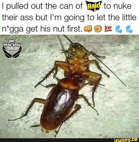 flying cockroach meme 28 images cockroach live gifs