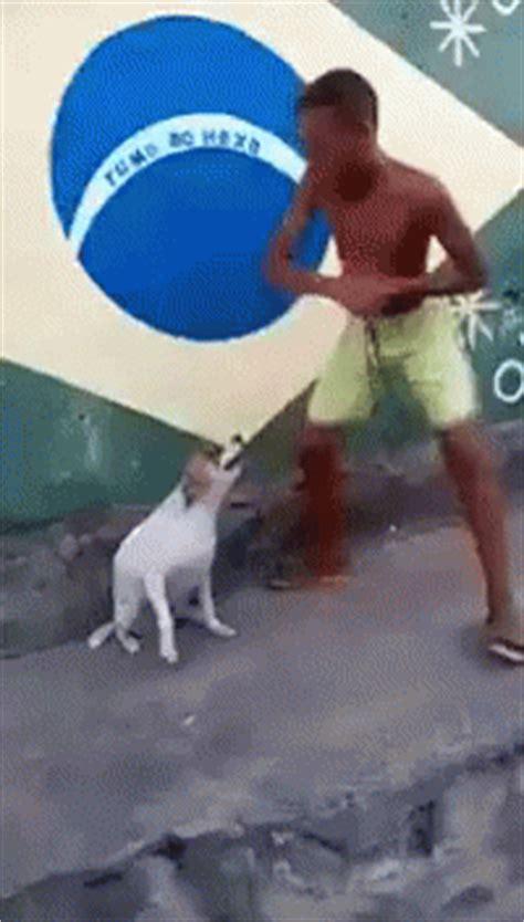 Dancing Dog Meme - dog dancing gif dog dancing boy discover share gifs
