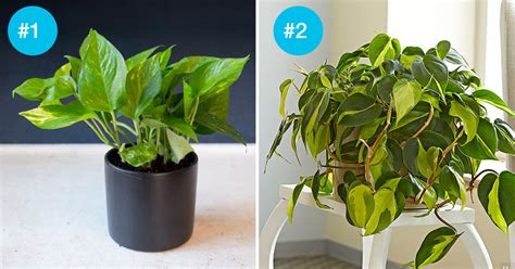 plants that grow in dark rooms don t get much sunlight in your home these 9 houseplants