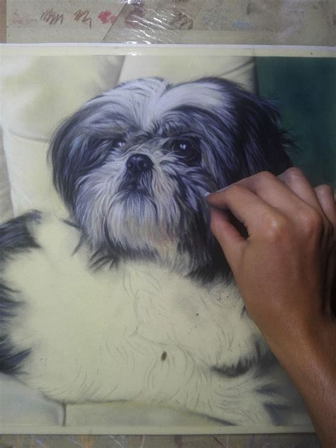 shih tzu northern ireland paddy the shih tzu colbert northern ireland artist and illustrator