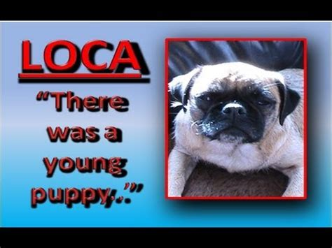 loca the pug is dead loca the pug sings again me da s great doovi