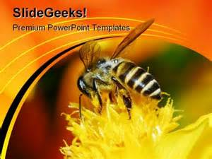 bee powerpoint template bee and flowers nature powerpoint templates and powerpoint