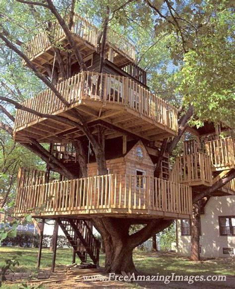awesome tree houses free amazing images 26 amazing tree houses and creative ideas