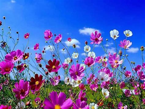 italia fiori dillo con un fiore italian