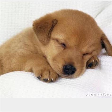 suche kaufen suche welpen kleinbleibenen hund in berlin hunde