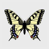 pattern formation and eyespot determination in butterfly wings 1000 images about tutorials adobe illustrator on