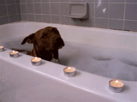 dog in a bathtub why dogs are better than cats in the dogs vs cats battle