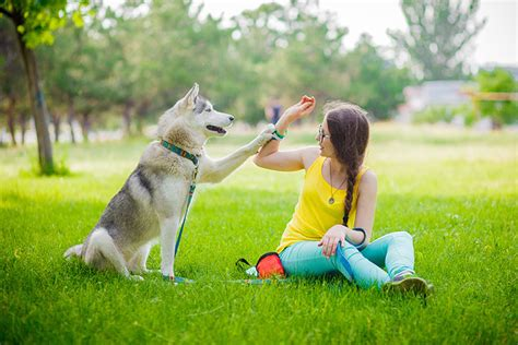 how to stop from paws pawing behavior what it means and how to stop it nation