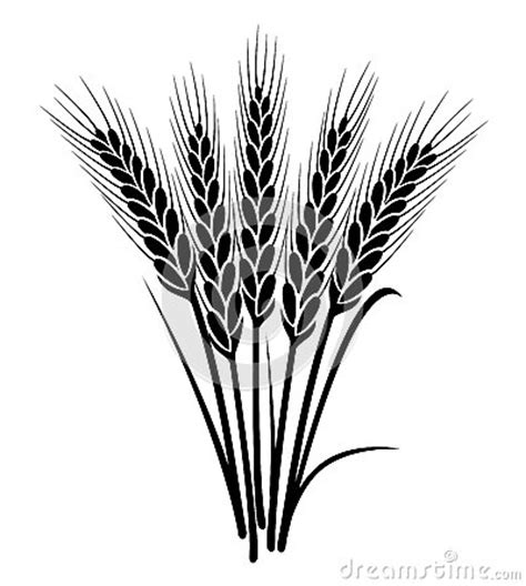 vector bunch  wheat ears stock photography image