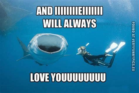 Oh Whale Meme - whale shark funny meme