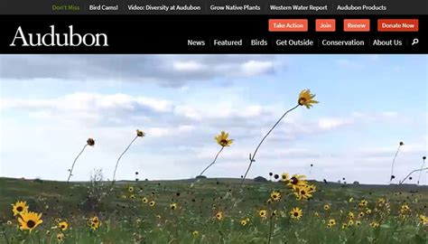 department of conservation partners with audubon