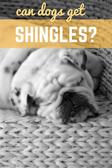 can dogs get shingles 71 best images about canine care on dna best dogs and for dogs