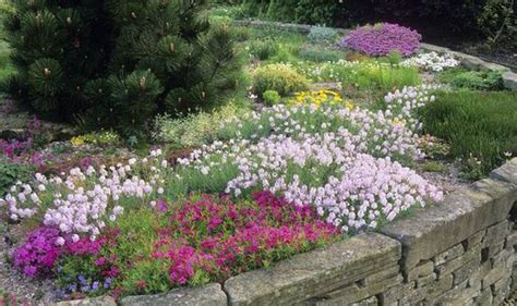 color me mine flower mound alan titchmarsh tips growing phlox in your garden garden