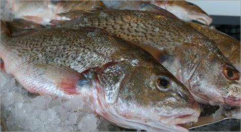 fresh fish house croakers freshfishhouse com fresh fish house michigan 187 blog archive