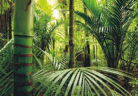 Vlies Papier by Xl Fototapete Tapete Dschungel Tropen Bambus Natur