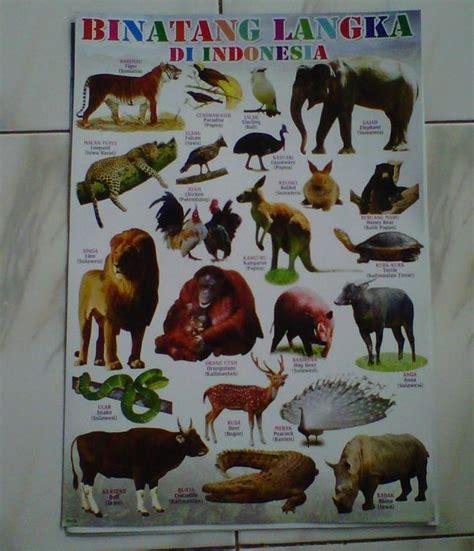 jual mainan poster edukasi seri binatang langka di indonesia juragan mainan