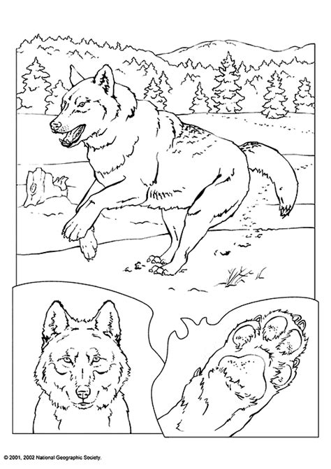 coloring books for wolves more advanced animal coloring pages for teenagers tweens boys zendoodle animals wolves practice for stress relief relaxation books wolf coloring page animals town animal color sheets